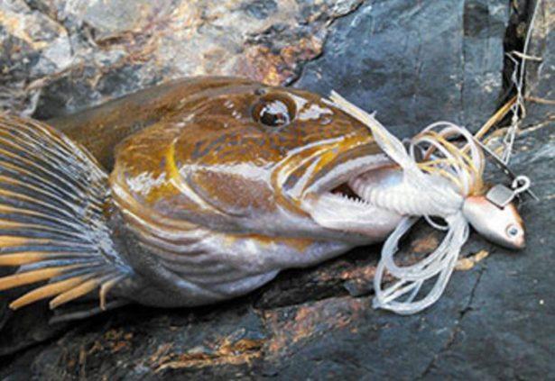 ロックフィッシュ-根魚